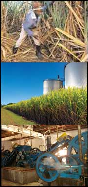 feasibility study report on sugar cane Feasibility study report on sugar cane juice executive summary sugar cane juice factory is one of the best industries for getting foreign earning in the short run basically sugar cane factory is a cottage industry but now it turning in to big industry.